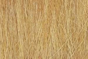 Woodland FG172 Trzcina - Harvest Gold