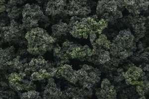 Woodland FC1649 Krzewy - Forest Blend - duże opakowanie